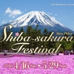 shiba のコピー