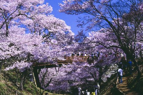 (5)ปราสาททาคาโตะ